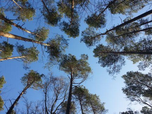 fischland darß,trejetas,medžiai