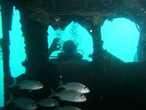 žuvis,nardymas,Sportas,giliai,vandenynas,vanduo,gamta,gyvūnai,jūra,nuotykis,koralas,akvariumas,vasara,padaras,jūrų,mėlynas