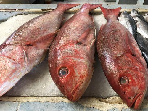 žuvis,raudona žuvis,šviežia žuvis,jūros gėrybės,spalvinga,atogrąžų,jūra,skanus