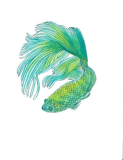 žuvis, vandens, akvariumas, Siamo, spalva, po vandeniu, Tropical, spalvinga, ryškus, vandens, augintinė, FIN, Tailandas, Kovos, egzotiškas, Betta splendens, plaukti, Betta, elegantiškas, Nemokama iliustracijos