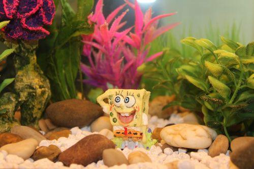 akvariumas, žuvis, povandeninis, akvariumas, rezervuaras, vanduo, plaukti, vandens, stiklas, jūrų, naminis gyvūnėlis, žalias, žuvies dubuo, akvariumas, geltona, Kempiniukas Plačiakelnis