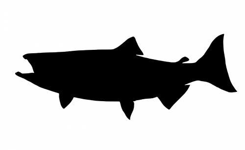 siluetas, lašiša, žuvis, izoliuotas, karalius, būtybių, jūra, gėlo vandens, žvejyba
