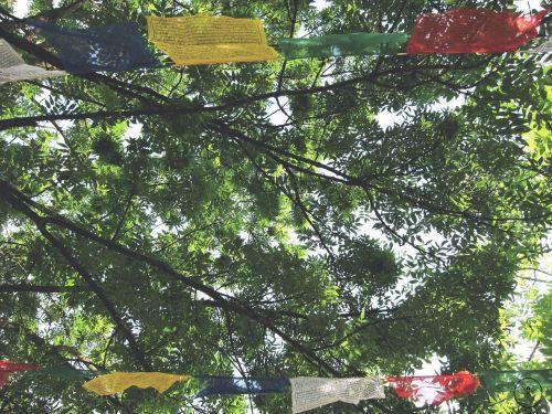 vėliavos,malda,taika,lapija,medis,vasara,religija,budizmas,tibetietis,spalvinga,simbolis,kultūra,dvasinis