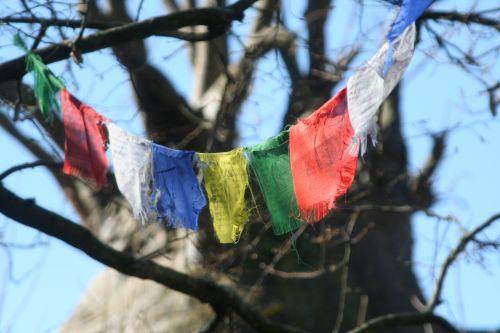 vėliavos, maldos, tibetas, medis, gamta, filialas, lauke, žiema, religija, be honoraro mokesčio