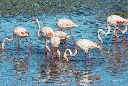flamingos,plakatas,gyvūnai,gyvūnas,Camargue,Phoenicopterus,rožinis flamingas,paukštis rožinis,pelkės,rožinis,paukščiai,gamta,migruojantys paukščiai