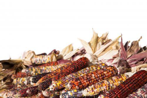 ruduo, calico & nbsp, kukurūzai, Iš arti, cob, spalvinga, pasėlių, apdaila, dekoratyvinis, kritimas, ūkis, grietinėlė & nbsp, kukurūzai, Halloween, derlius, Indijos & nbsp, kukurūzai, kukurūzai, dekoratyvinis, sezonas, padėka, kreminė kukurūzai