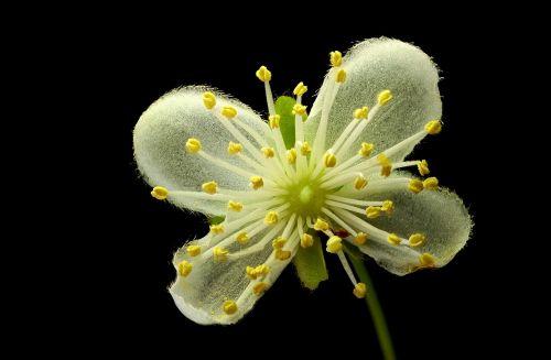 flora,makro,mažas