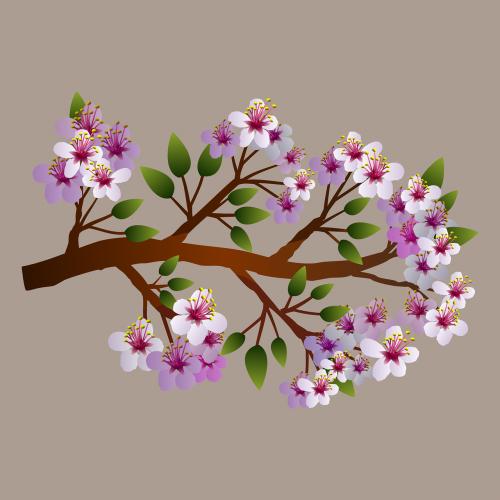 gėlių,gėlės,gamta,pavasaris,2016 pavasaris,pavasaris,augmenija,nemokama vektorinė grafika