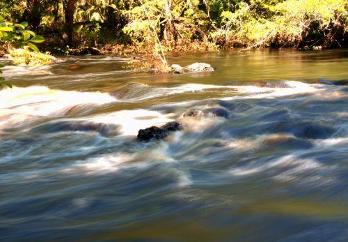 florida,srautas,upelis,upė,srautas,gamta,srautas,kraštovaizdis,medis,bankas,peizažas,vanduo,vasara