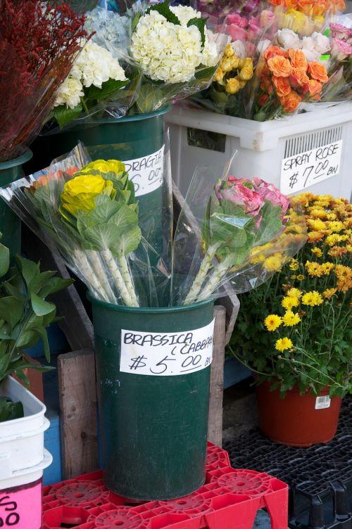 floristas,gėlės,parduotuvė,laikyti