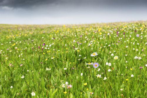 gėlė,laukinė gėlė,pavasaris,upė,ganyklos,prairie,kraštovaizdis,gamta,dangus,žolė,vaizdingas,vanduo,žalias,natūralus,lauke,vasara,zoige,mėlynas,vasaros kraštovaizdis,gamtos kraštovaizdis,debesis,oras,cloudscape,šviesa,saulės šviesa,geltona,kelionė,balta