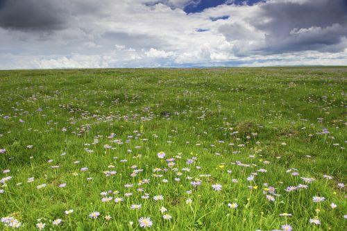 gėlė,laukinė gėlė,pavasaris,upė,ganyklos,prairie,kraštovaizdis,gamta,dangus,žolė,vaizdingas,vanduo,žalias,natūralus,lauke,vasara,zoige,mėlynas,vasaros kraštovaizdis,gamtos kraštovaizdis,Debesuota,oras,cloudscape,šviesa,saulės šviesa,geltona,kelionė,balta