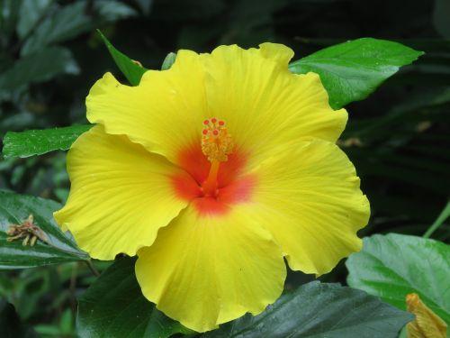 gėlė,žydėti,žiedas,botanika,augalas,sodas,botanikos,geltona,šviesus,sodininkystė,natūralus,gamta,gėlių,sodininkystė,sodininkas,botanikos