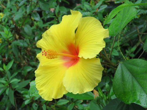 gėlė,žydėti,žiedas,botanika,augalas,sodas,botanikos,geltona,šviesus,sodininkystė,natūralus,gamta,gėlių,sodininkystė,botanikos,sodininkas