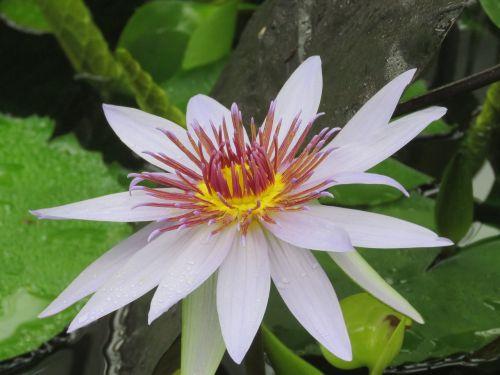 gėlė,žydėti,žiedas,botanika,augalas,sodas,botanikos,sodininkystė,žalias,natūralus,gamta,gėlių,sodininkystė,sodininkas,botanikos
