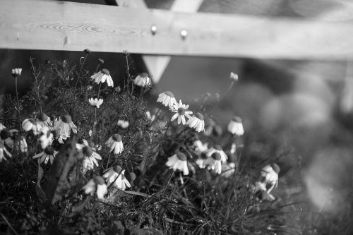 gėlė, gėlės, gėlė