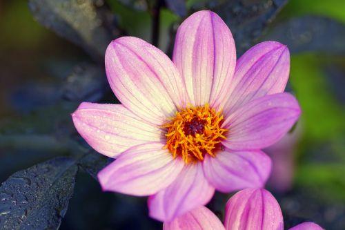 gėlė,balti dribsniai,balta gėlė,sodas,ruduo,parkas,saulėtas