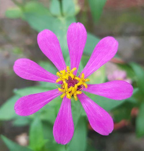 gėlė,spalvinga,spalvinga,šviežias,žalias,vasara,žiedas,šviesus,gamta,atogrąžų,sodas,gyvas,botanika,žydi
