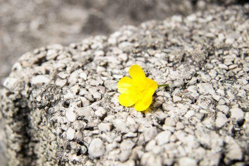 gėlė,gėlės,vasaros gėlės,sodo gėlės,gamta,gražios gėlės,graži gėlė,geltona gėlė,augalas,vasara,gražus,gėlių laukas,laukinės gėlės,sodo gėlė,žydėti,vienatvė,liūdesys,paliktas,geltonos gėlės,šviesus,geltona