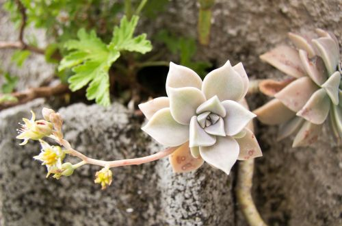 gėlė,gėlės,vasaros gėlės,sodo gėlės,gamta,gražios gėlės,graži gėlė,augalas,vasara,gražus,gėlių laukas,laukinės gėlės,sodo gėlė,žydėti