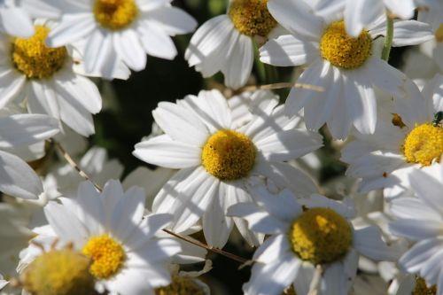 gėlė,gamta,sodas,gėlių,šviežias,gėlių dovanos,gėlių gamta,gėlių pieva,gėlių vaizdas,gėlių saule,gėlių vaizdas,gėlių pavasaris,gėlių sodas,lauko gėlė,mielas gėlė,jubiliejus,gėlių fonas,žiedas uždaras,gėlių rasos,gėlių laukas,gėlių arti saulėtas gėlė,pavasario gėlė,žiūrėti gėlių,fonas,žiedas