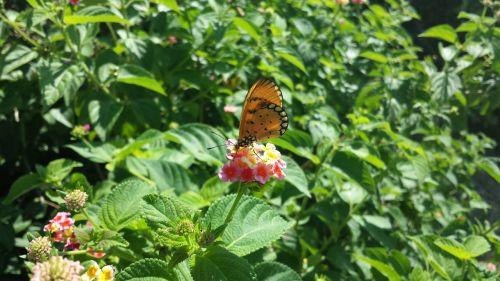 gėlė,drugelis,vabzdžiai,vasara,sparnas,oranžinė,žalias