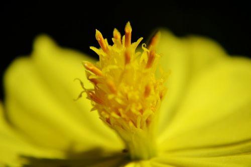 gėlė,gėlių centras,gamta,vasara,Iš arti,žiedas,Šri Lanka,Mawanella,ceilonas