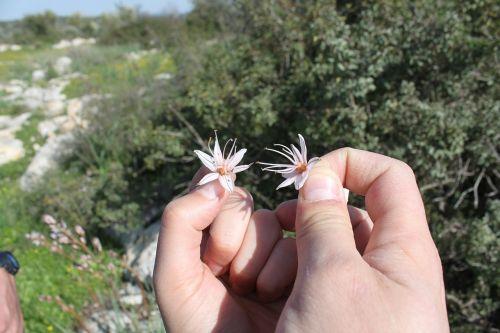 gėlė,gėlės,graži gėlė,pavasaris,rankos,romantika,balta,menas,tapetai,meilė,Valentino diena,gražus,mielas,ranka,romantiškas,valentine,graži