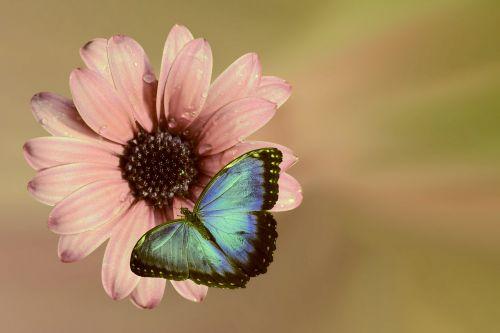 gėlė,rožinis,žiedas,žydėti,vabzdys,drugelis,gamta