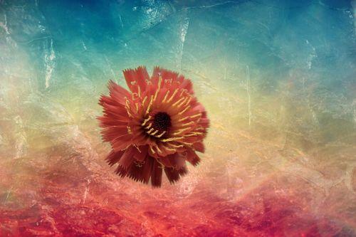 gėlė,raudona,mėlynas,fantazija,sirrealis,žydėti,gamta