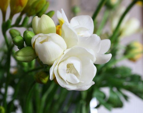 gėlė,gėlių puokštė,gėlių puokštė,gėlių,gėlių puokštė,gamta,balta,žiedas,žydėti,spalva,augalas,spalvinga,pavasaris,žalias,šviežias,lapai,meilė