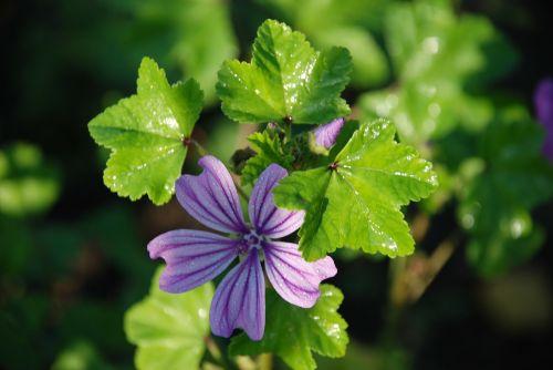 gėlė,puokštė,lapai,gamta,žalias,vanduo,lašas,violetinė,geltona,saulėtas,rožė,žydėti,gražus,makro,flora,išsamiai,rožinis,balta,sodas