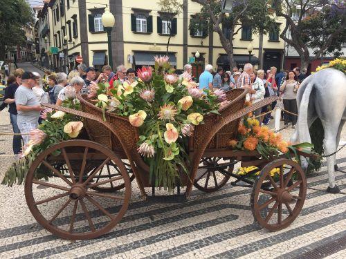gėlė,festivalis,Madeira