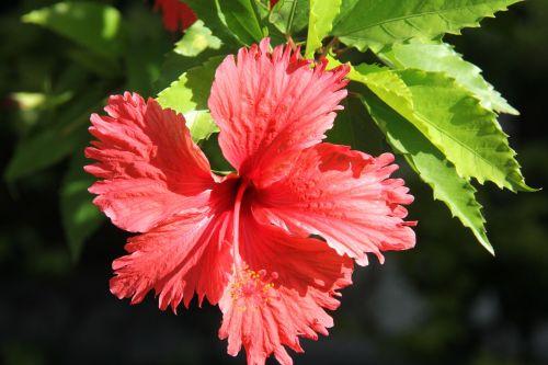 gėlė,sol,gamta