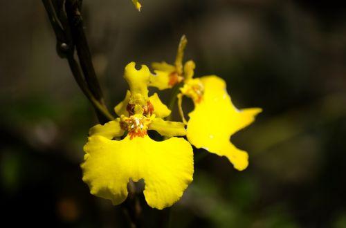 gėlė,flora in machu picchu,flora cusco