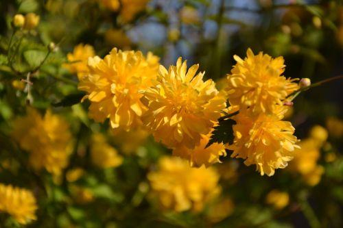 gėlė,gamta,augalas,žiedlapis,sodas,gėlės,vasara,lapai,gėlių,sezonas,aplinka,šviežias,parkas,spalva,schönwetter,šviesus