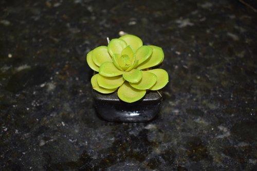 gėlė, augalų, dirbtinis, botanikas, gėlių, pobūdį, žiedlapiai, pavasaris, floros, Sodas, vasara, Grožio, gražus, botanika, žalias, dekoratyvinis, augalų dirbtinis, dirbtinis augalų, žalia augalų, mažas augalų, augalas su vaza, augalų dekoro