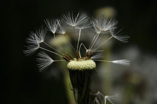 gėlė,sodas,gamta,pieva,vanduo,lašas,lašai,po audros,augalas,lietus,Iš arti,po lietaus