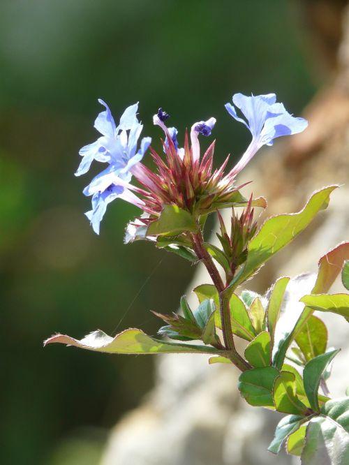 gėlė,gamta,augalas,žiedas,žydėti,farbenpracht,farbenspiel