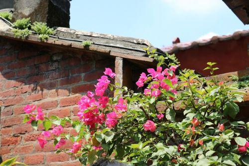 gėlė,siena,augalas