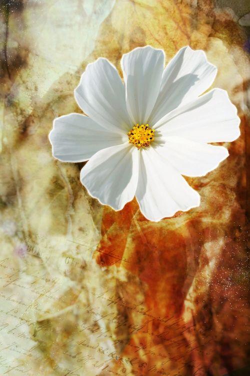 gėlė,laukinė gėlė,balta,žiedas,žydėti,augalas,menas