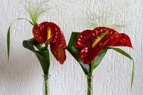 gėlė,puokštė,flora