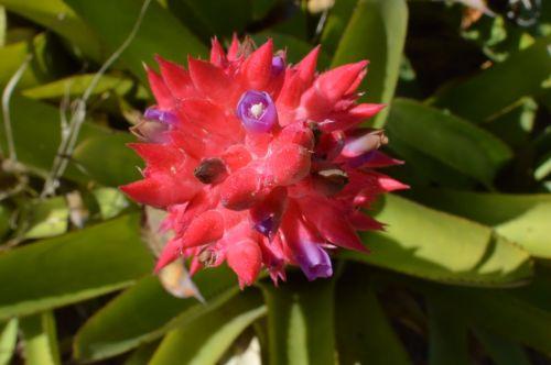 gėlė, makro, botanika
