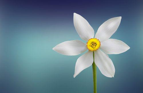 gėlė, gražus, grožis, žydėti, žydi, žiedas, mėlynas fonas, botanikos, botanika, Iš arti, Iš arti, Iš arti, spalva, spalvos, dekoratyvinis, flora, gėlių, žalias, galva, vienišas, makro, natūralus, gamta, vienas, žiedlapiai, augalas, sezonas, pavasaris, stiebas, vasara, geltona