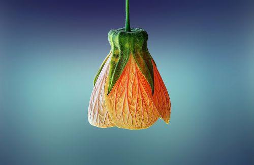 gėlė, gražus, grožis, žydėti, žydi, žiedas, botanikos, botanika, Iš arti, Iš arti, Iš arti, spalva, spalvos, dekoratyvinis, flora, gėlių, žalias, galva, vienišas, makro, natūralus, gamta, vienas, žiedlapiai, augalas, sezonas, pavasaris, stiebas, vasara, geltona