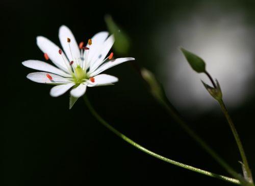 gėlė,gamta,augalas,pavasaris,pieva,sodas,žiedlapiai,grožis,vulgaris,gamtos grožis,žydi,vasara,Iš arti