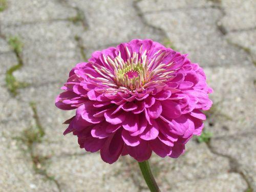 gėlė,sodas,flora
