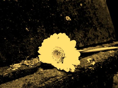 gėlė, akmuo, memorialinis akmuo, žiedas, žydėti, augalas, geltona, akmeninė siena, apdaila, dekoruoti, senas, architektūra, kaimiškas, poilsis