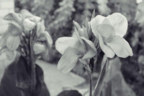 gėlė,augalas,sodas,gamta,gražus,žiedadulkės,gėlės,gyvoji gamta,žydėti,augalai