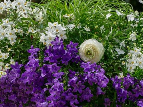 gėlių kompozicija, varpelis, vėdryno baltos spalvos, gėlės, violetinė, baltos spalvos, lapų, gėlė, augalų, Sodas, pobūdį, pavasaris, vasara